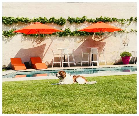 Ombrellone a muro Paraflex ǀ Rotondo ǀ 2,7 m ǀ Orange ǀ Sostegno Classico